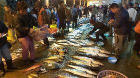 馬公漁市場漁獲豐收(1)