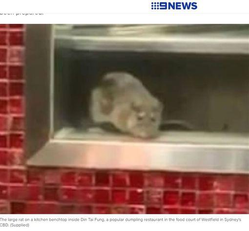 台灣最具國際知名度的連鎖餐廳鼎泰豐(Din Tai Fung),以小籠包聞名國際,深受不少消費者喜愛。但日前有民眾在澳洲雪梨的鼎泰豐驚見巨大「老鼠」,影片曝光後,引發廣大討論。目前該間鼎泰豐分店已暫停營業,並發聲明強調會嚴肅看待這起事件。(圖/翻攝自9news.com.au)