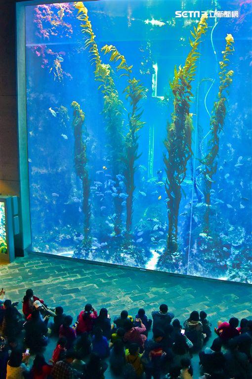 海生館引進巨型海藻