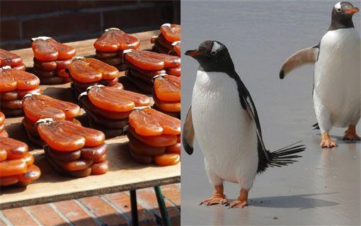 企鵝腳,烏魚子,抹黑 圖/臉書