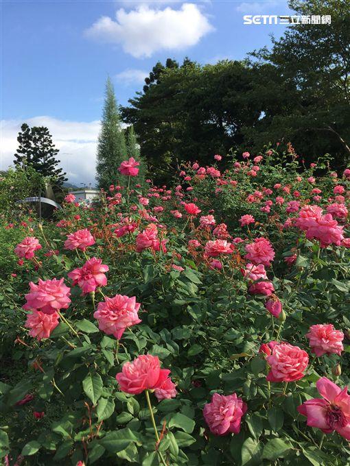 初一,踏青,台北花博公園,花之隧道,打卡,新生公園,玫瑰園