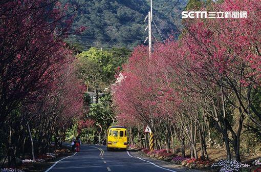 台北市觀光傳播局,陽明山,賞花,美食,夜景,溫泉,彩虹
