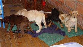 美國,獸醫,幼犬,狗,體內,海洛因,毒品,走私,哥倫比亞 圖/翻攝自推特