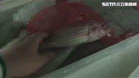 台中魚市場、魚貨、魚市場/資料照