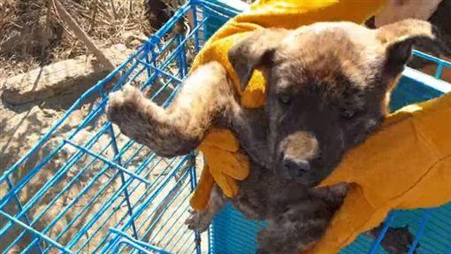 高雄,流浪犬,幼犬,地洞,台灣動物緊急救援小組(圖/翻攝台灣動物緊急救援小組臉書)