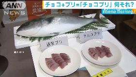 巧克力養魚1700