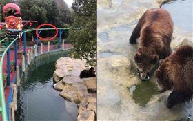 動物園,棕熊,蘋果手機,iPhone(圖/翻攝自中新網微博)