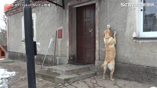 ▲主人遲遲不開門,汪星人起身按門鈴。(圖/AP/Jukin Media授權)