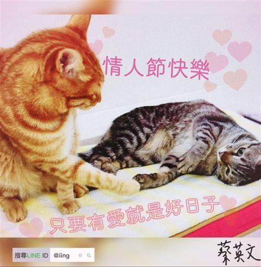 蔡英文總統14日一早就貼出LINE,用她的兩隻愛貓蔡想想和蔡阿才的合影,向大家說聲情人節快樂。