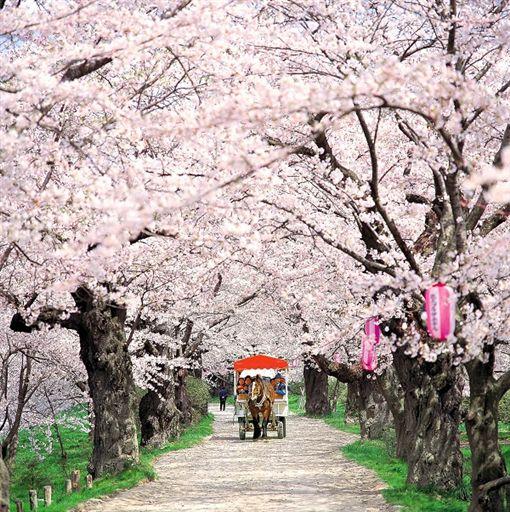 北上展勝地公園  櫻花祭.jpg