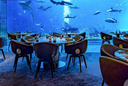 ▲海洋生物就在奧西亞諾海底餐廳超大的水族箱中,陪你一起吃飯。(圖/鳳凰旅遊)