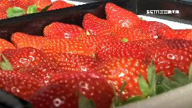 水果怪台語1200