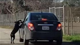 遭狠心飼主丟包路邊 忠犬在車旁猛追哀求別棄養?(圖/翻攝自illusion Wide YouTube)