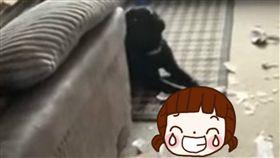 性玩具,狗,包裹,代收,咬爛,鄰居,假陽具,尷尬,害羞 圖/翻攝自YouTube