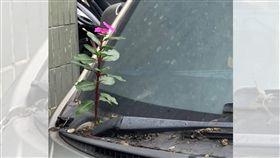 停車,灰塵,花朵,雨刷(圖/翻攝自爆料公社)