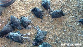 彰化1土雞場染禽流感 逾3隻雞遭撲殺/翻攝畫面