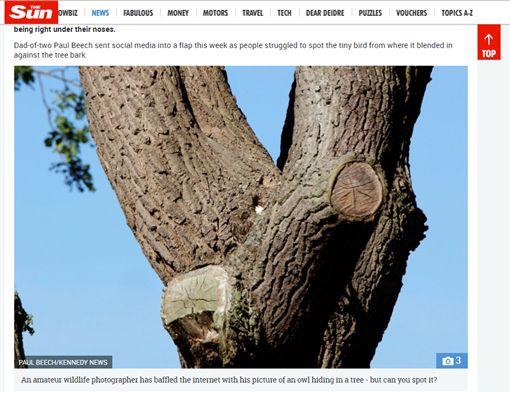 最強保護色!貓頭鷹躲樹上 網友直呼不可能找到牠太陽報