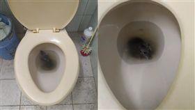 廁所上到一半發現屁股癢癢,原來是有隻老鼠在溺水!?遇到這種事是要救他還是....(圖/爆廢公社)