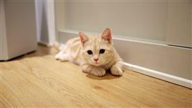 貓的生活提案,貓咖啡廳,小貓,貓咪。(圖/記者簡佑庭攝)