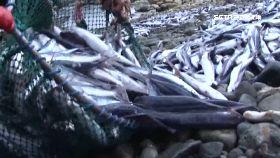 蘭嶼招魚祭1600