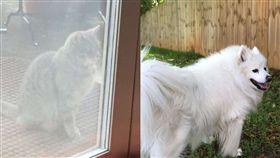 每天庭院癡等…鄰居貓找不到過世好友 飼主心疼:1年了(圖/翻攝自the dodo)