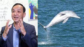 朱立倫,白海豚