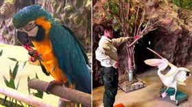 鸚鵡吃辣。(圖/六福旅遊集團提供)
