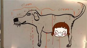 Buster,狗,丈量,胯下,專業,寵物,老公,外籍, 圖/翻攝自Buster是一隻狗 臉書