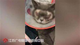 大陸飼主給貓割雙眼皮/江蘇新聞