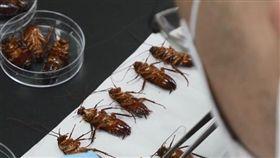 蟑螂,小強,強化,德國,美洲,環境,抗藥性,檢測(圖/翻攝自Pxhere)