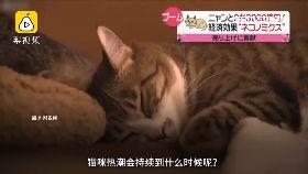 日瘋貓陪睡2400