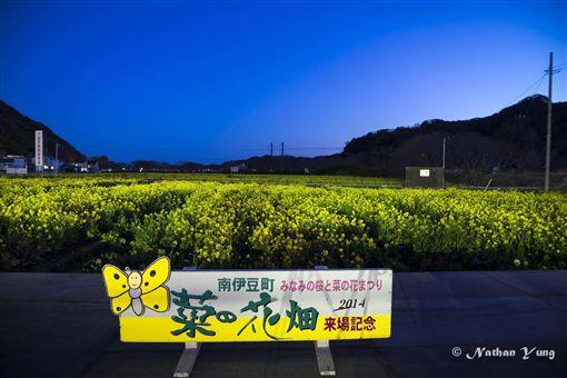 賞櫻,饌旅,娜柴,網紅,打卡,三浦海岸,河津櫻,油菜花,粉黃隧道