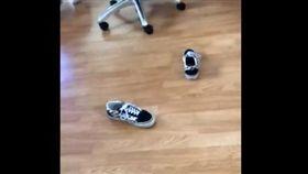 Vans,鞋子,正面,朝上,VansChallenge,Twitter 圖/翻攝自Twitter