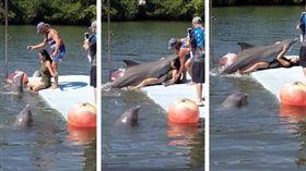 正妹腳開開 海豚「凍抹條」出水硬騎 (圖/翻攝自Comicos Ambulantes Perú Oficial 臉書)