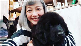 邵庭多年愛貓狗,打算在無經濟壓力下開一間收容所。(圖/翻攝自邵庭臉書)