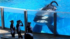 殺人鯨33年來都在取悅人類,最後抑鬱而死。(圖/翻攝自Youtube)