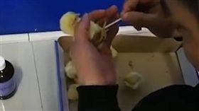 小雞遍地走…暖警救援送給大廚養 壞笑:等牠長大了再說 圖/翻攝自騰訊 https://v.qq.com/x/cover/8e9mno16bbvjtzx/y084617ydyq.html