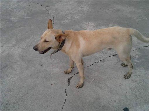 小黃狗死在田溝,農夫夢見觀音菩薩後撿到狗,深信是牠回來了。(圖/翻攝靈異公社)