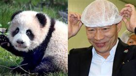 韓國瑜,熊貓,高雄,中國