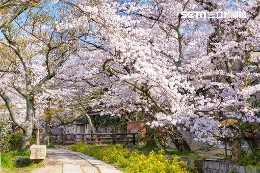 賞櫻,櫻花,訂房,Agoda圖/Agoda
