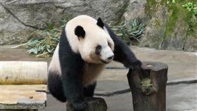 高雄,韓國瑜,熊貓,潘恆旭(圖/翻攝臉書)