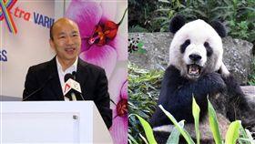 韓國瑜、貓熊(團團) 圖翻攝自韓國瑜、台北市立動物園臉書