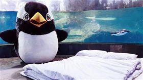 屏東海生館一直是許多國內大小朋友打開海洋世界的第一道門,而「夜宿海生館」更是近年來海內外遊客列入首選的生態旅遊行程。除了可以看著繽紛燦爛的海洋生物在眼前自在遨遊,近距離擁抱入夜後的奇幻海洋世界,甚至和海生館中最具人氣的企鵝家族們打招呼,都是許多遊客在海生館最興奮的時刻。
