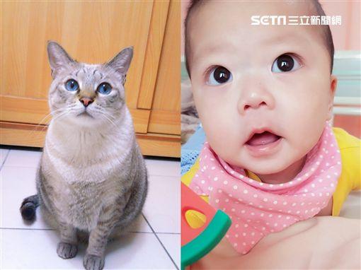 與臨終老貓相約續前緣…她生二寶兒見「紅胎記」淚崩 圖/蕭小姐授權提供