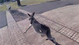 強納森滑翔翼降落後原本以為袋鼠要歡迎他,沒想到被一陣暴打。(圖/翻攝自Youtube)