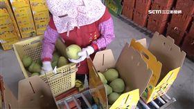 謝龍介幫賣文旦 農民批:打亂市場價格