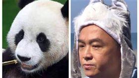 貓熊與潘恆旭