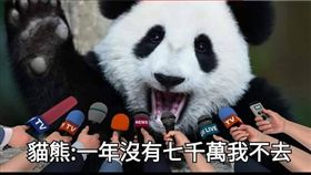 ▲網友反串中國貓熊經紀人諷刺潘恆旭。(圖/翻攝臉書「只是堵藍」)