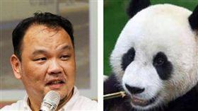稱貓熊可愛「無攻擊性」  學者怒斥:媒體不能沒有常識!(圖/翻攝自管中祥臉書、台北市立動物園臉書)