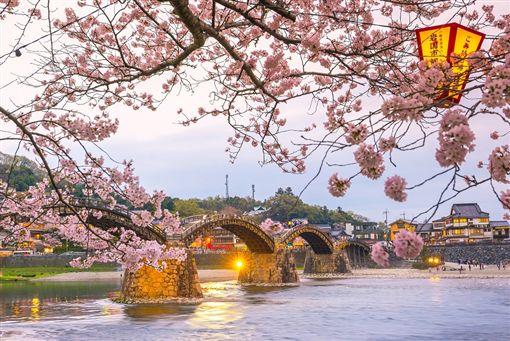 ▲錦帶橋是日本的賞櫻百選名所之一(圖/shutterstock.com)
